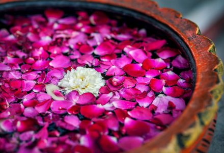 39230297 - white flower with red rose petals in the bowl in spa salon