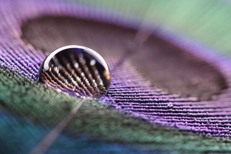9122209 - water droplet on peacock feather